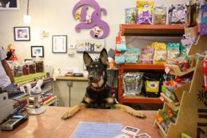 Consultor Contador Especializado em Pet